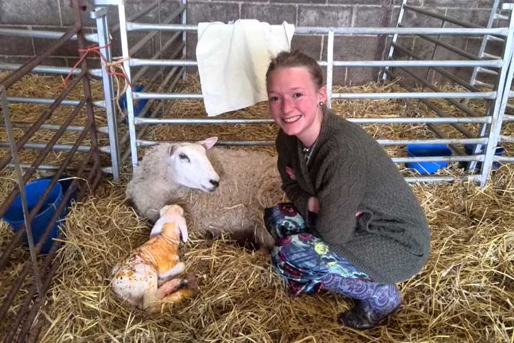 visitor and ewe with lamb